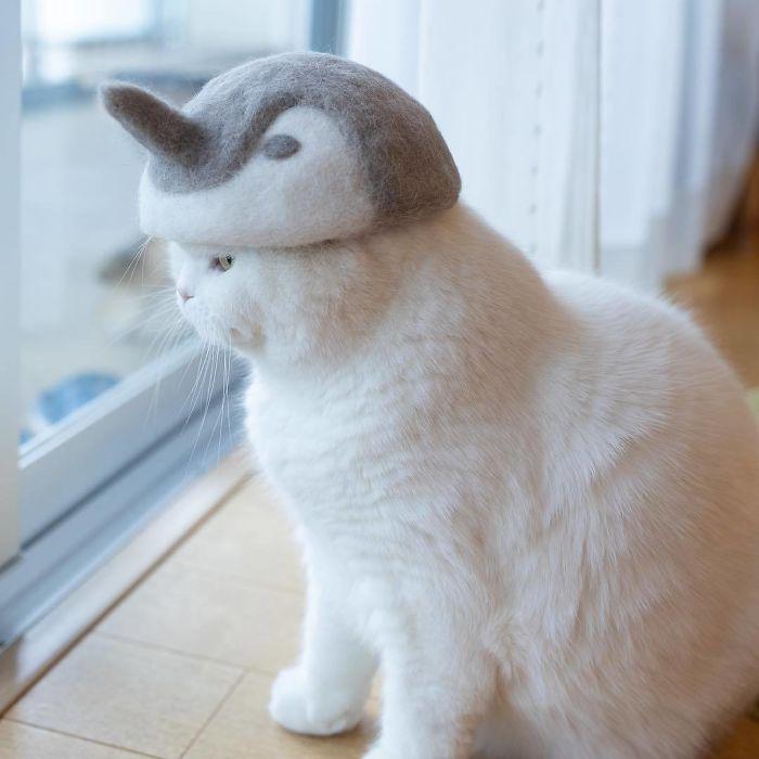 怎么让猫主子愿意戴帽子插图(18)