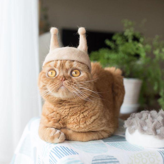 怎么让猫主子愿意戴帽子插图1