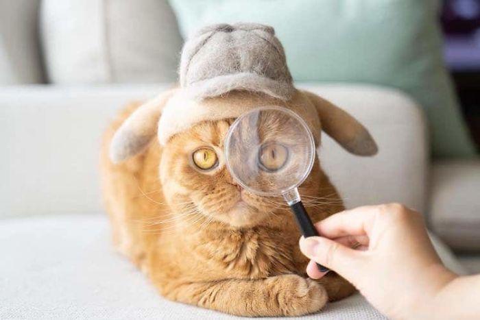 怎么让猫主子愿意戴帽子插图(19)