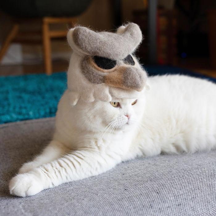 怎么让猫主子愿意戴帽子插图(20)