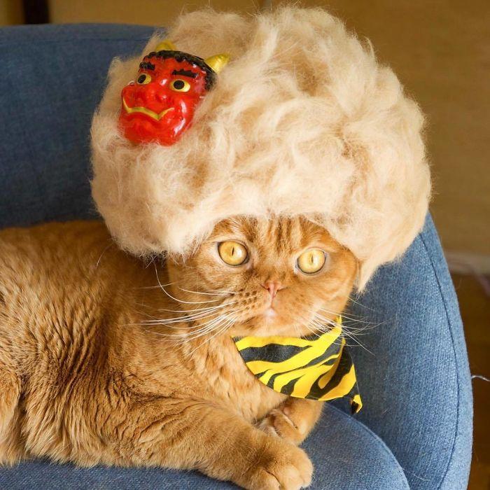 怎么让猫主子愿意戴帽子插图(21)