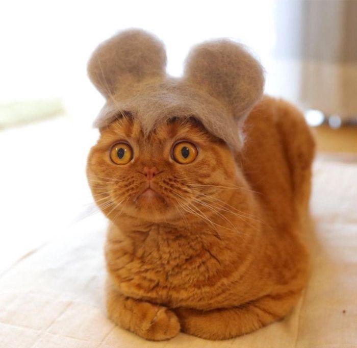 怎么让猫主子愿意戴帽子插图(22)