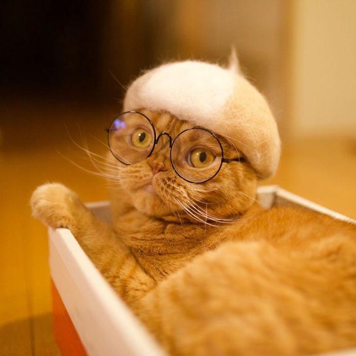 怎么让猫主子愿意戴帽子插图(23)