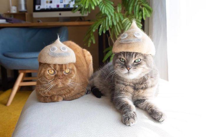 怎么让猫主子愿意戴帽子插图(24)