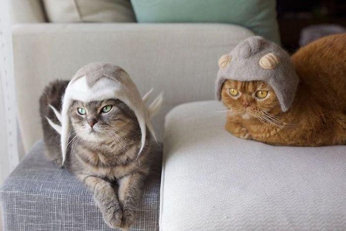 怎么让猫主子愿意戴帽子插图(25)