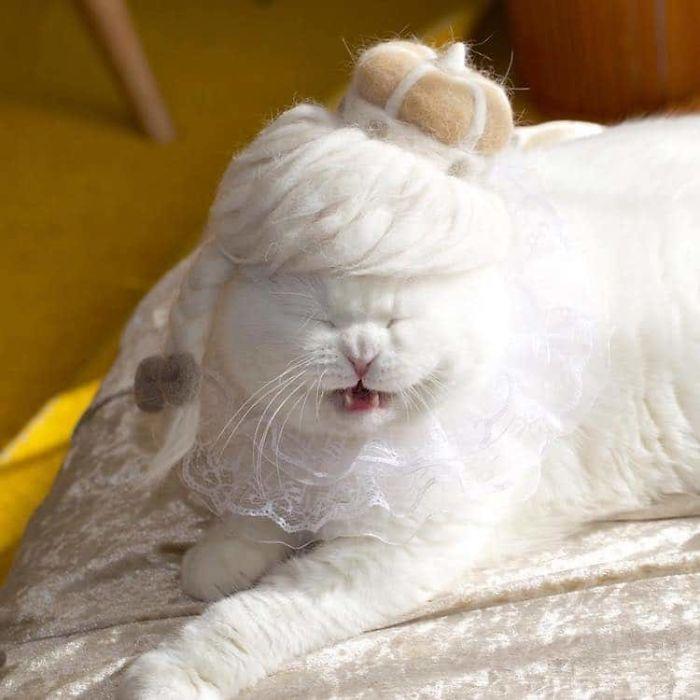 怎么让猫主子愿意戴帽子插图(27)