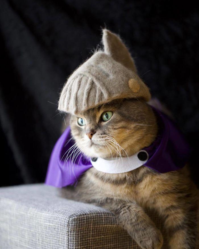 怎么让猫主子愿意戴帽子插图(28)