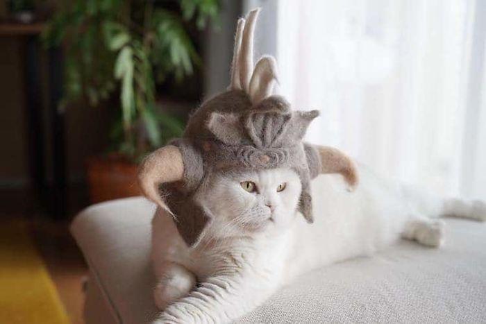 怎么让猫主子愿意戴帽子插图2
