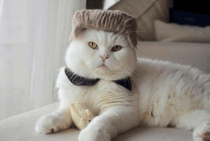 怎么让猫主子愿意戴帽子插图(29)