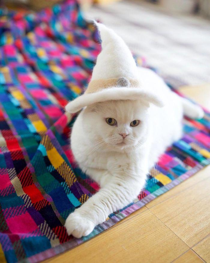 怎么让猫主子愿意戴帽子插图3