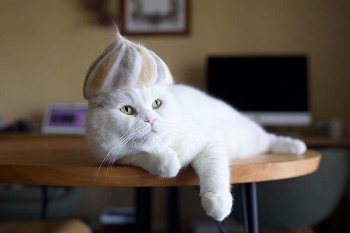怎么让猫主子愿意戴帽子插图(4)