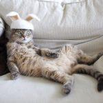 巨型猫咪的世界插图