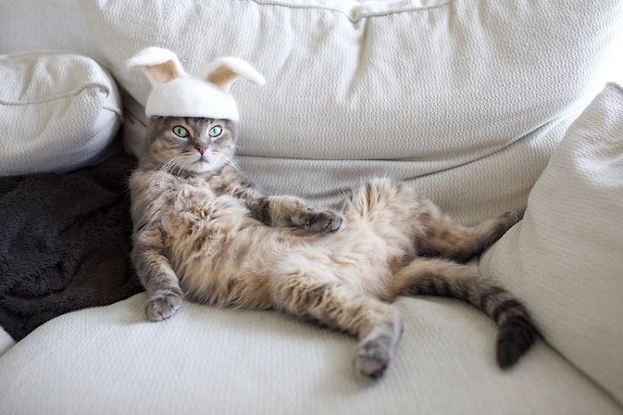 怎么让猫主子愿意戴帽子缩略图