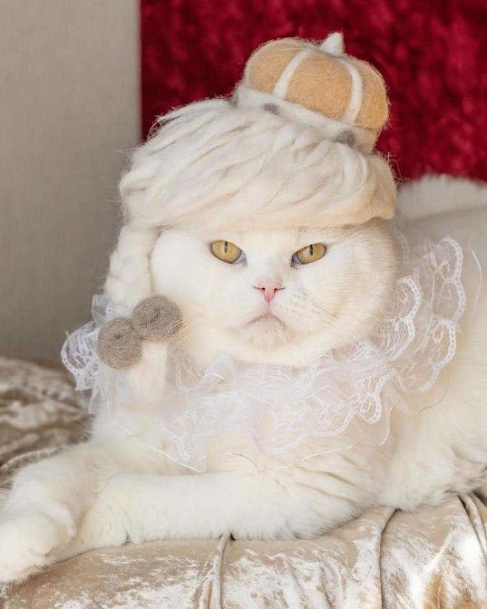 怎么让猫主子愿意戴帽子插图7