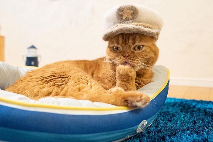 怎么让猫主子愿意戴帽子插图(8)