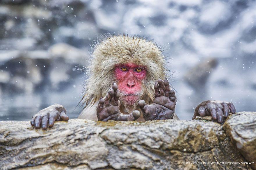 2019年搞笑野生动物摄影竞赛 — 大自然欢乐的风采插图35