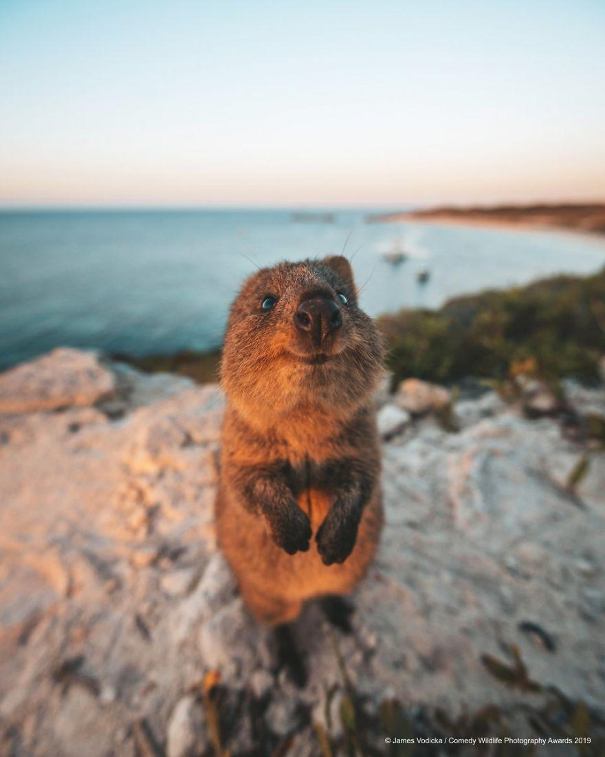 2019年搞笑野生动物摄影竞赛 — 大自然欢乐的风采插图6