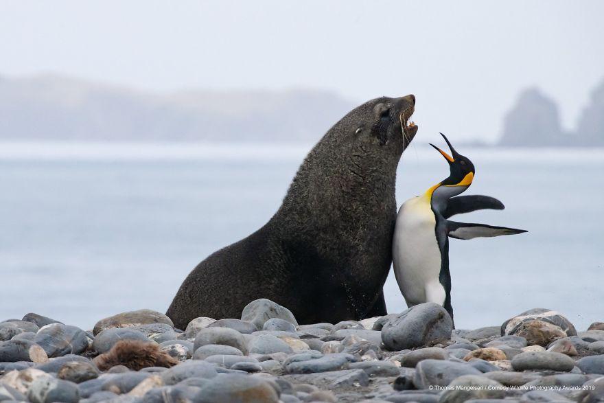 2019年搞笑野生动物摄影竞赛 — 大自然欢乐的风采插图11