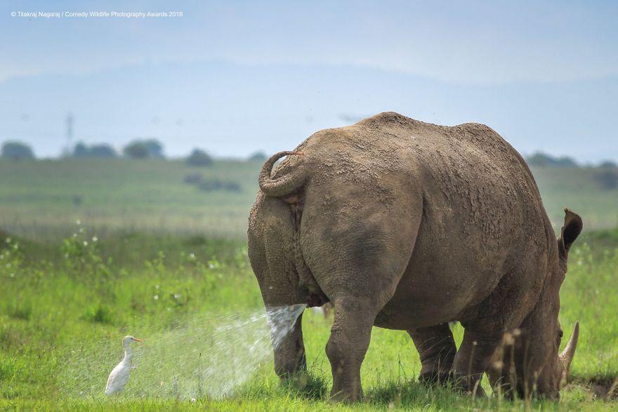 2019年搞笑野生动物摄影竞赛 — 大自然欢乐的风采插图