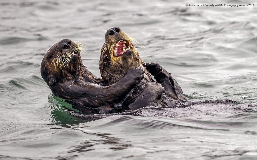 2019年搞笑野生动物摄影竞赛 — 大自然欢乐的风采插图31