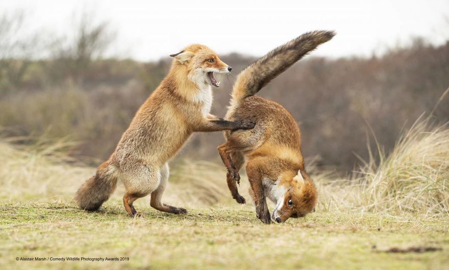 2019年搞笑野生动物摄影竞赛 — 大自然欢乐的风采插图25