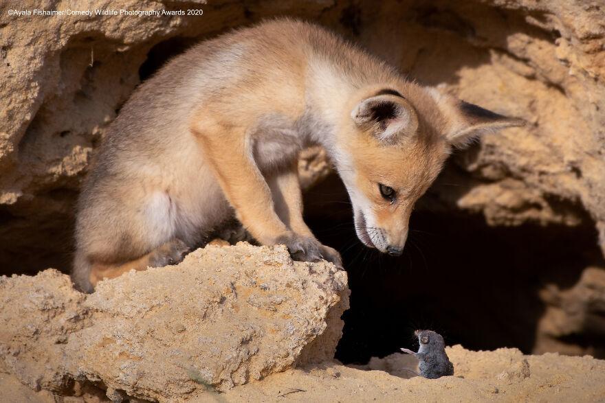 2020年趣味野生动物摄影获奖作品缩略图