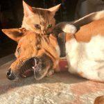 为什么猫狗老爱打架–狗还打不过猫缩略图