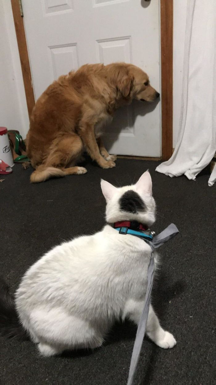 为什么猫狗老爱打架–狗还打不过猫插图22