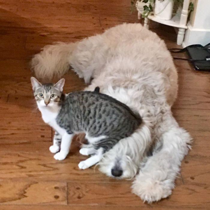 为什么猫狗老爱打架–狗还打不过猫插图19