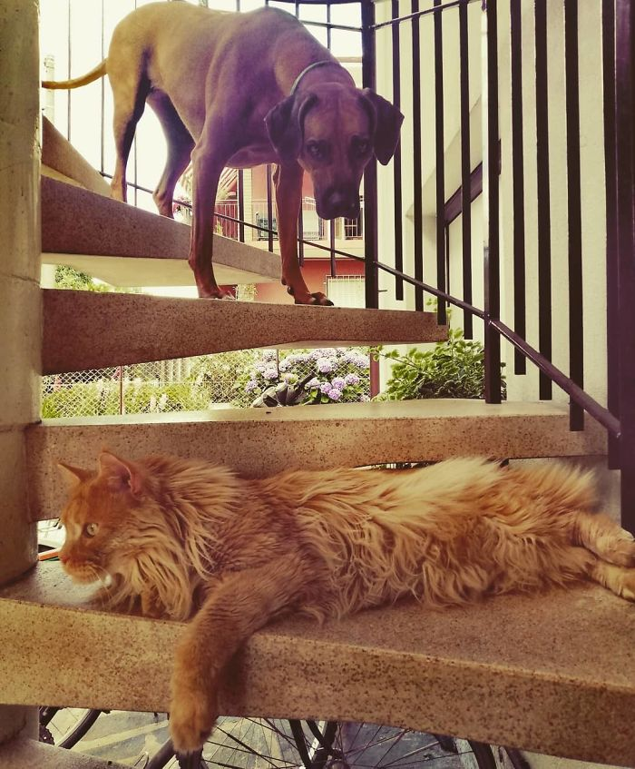 为什么猫狗老爱打架–狗还打不过猫插图16