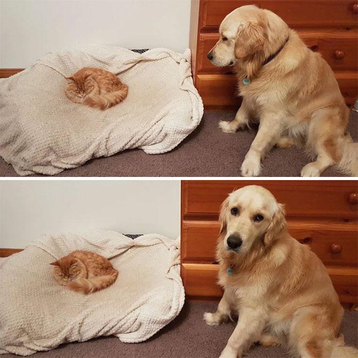 为什么猫狗老爱打架–狗还打不过猫插图9