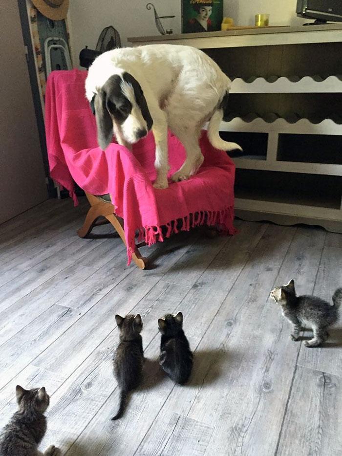 为什么猫狗老爱打架–狗还打不过猫插图1