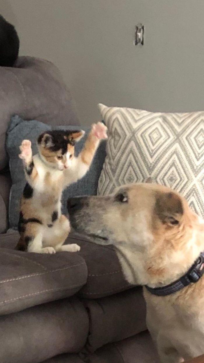 为什么猫狗老爱打架–狗还打不过猫插图33