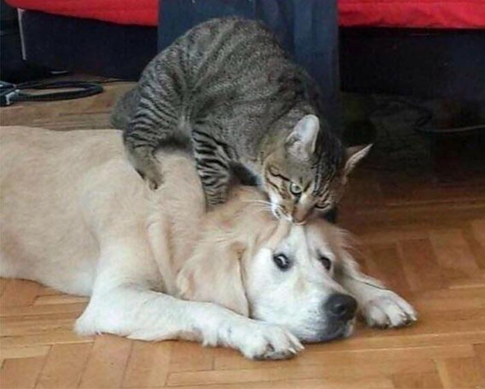 为什么猫狗老爱打架–狗还打不过猫插图2