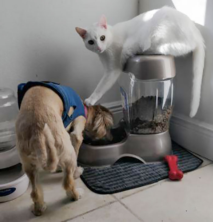 为什么猫狗老爱打架–狗还打不过猫插图5