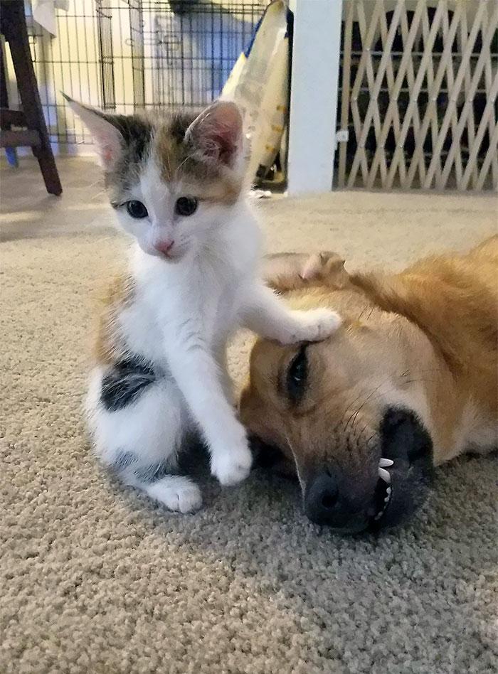 为什么猫狗老爱打架–狗还打不过猫插图