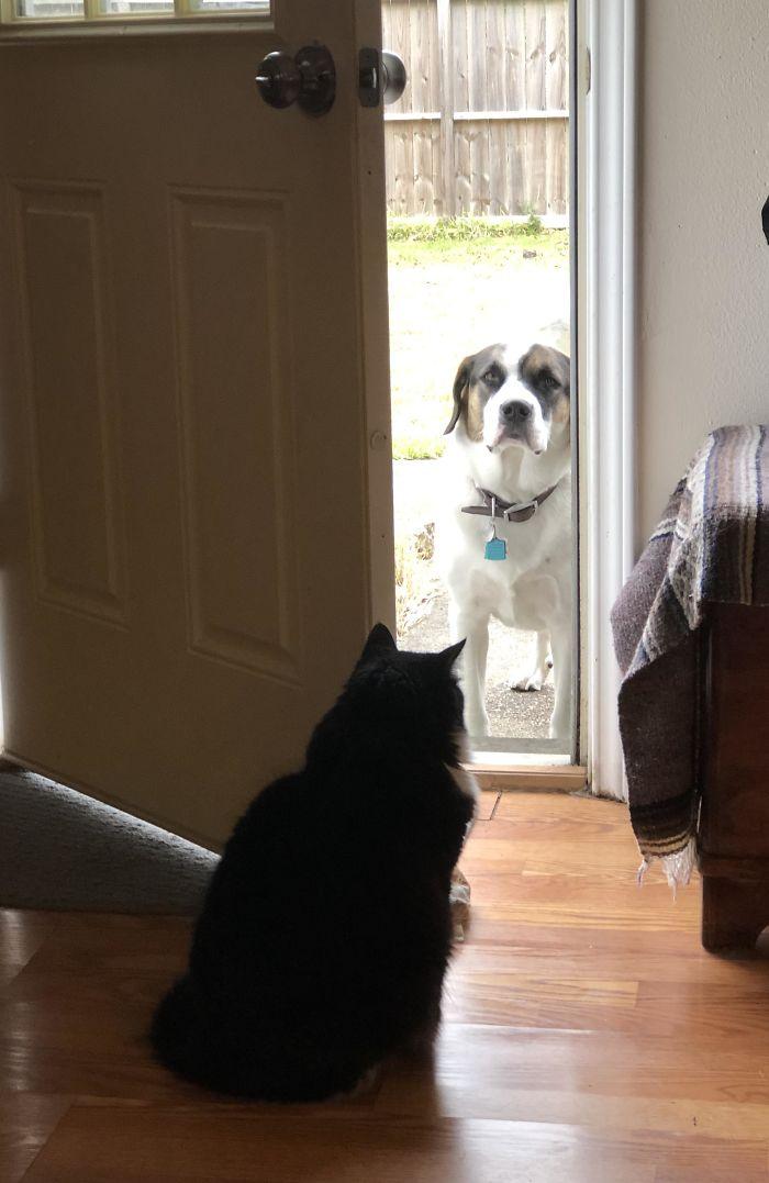 为什么猫狗老爱打架–狗还打不过猫插图32