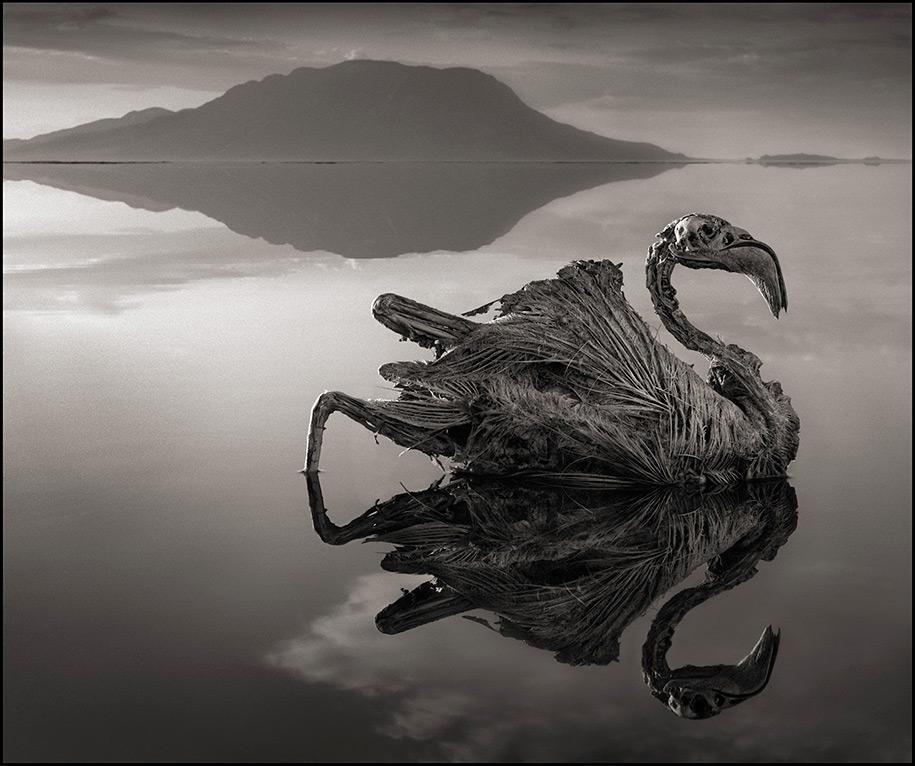 东非的死亡之河 – 动物被石化仿佛来自地狱的雕像缩略图