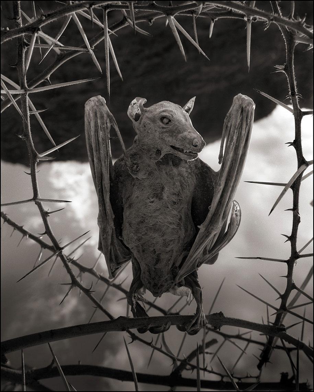 东非的死亡之河 – 动物被石化仿佛来自地狱的雕像插图1