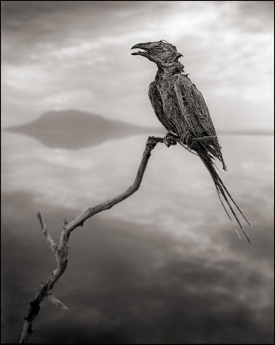 东非的死亡之河 – 动物被石化仿佛来自地狱的雕像插图3