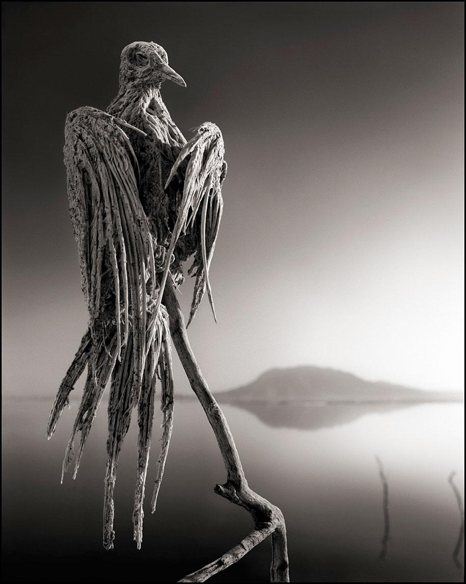 东非的死亡之河 – 动物被石化仿佛来自地狱的雕像插图